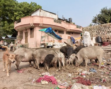 Indian disposal dump in the street