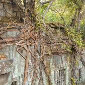 Photo Beng Mealea Temple, Angkor, Cambodia
