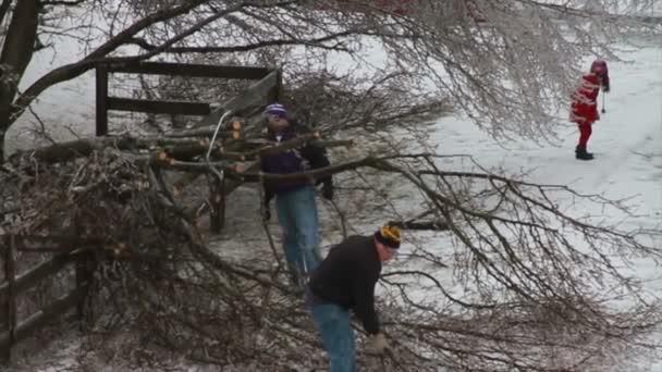 Cutting Tree Down