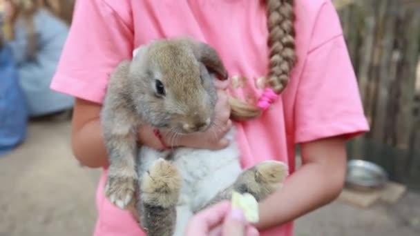 Egy kislány, aki egy aranyos nyulat tart, káposztalevelet rágcsál egy állatsimogatóban..