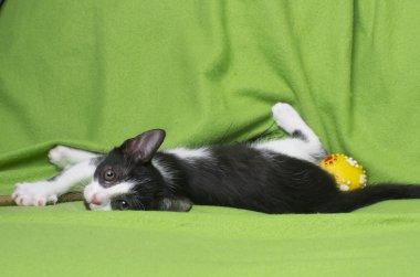 black and white kitten on green