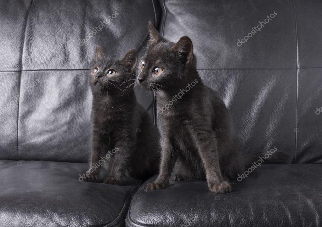 Kočka, Kočička, Kočka, Černá. 76 72 21.