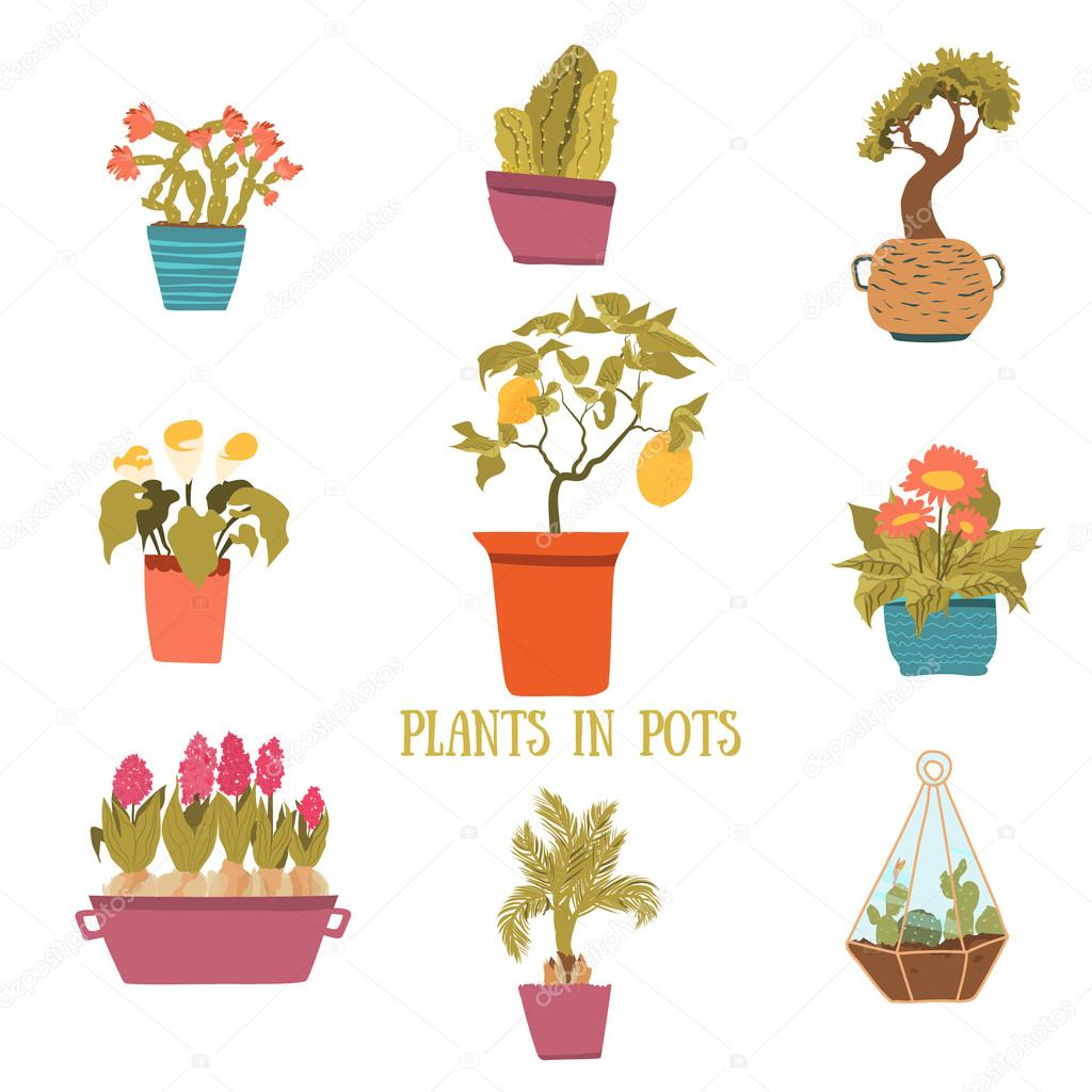 A set of colorful pots of flowers in cartoon style. Cactuses, lemon tree, calla lily, bamboo in pots. Vector illustration