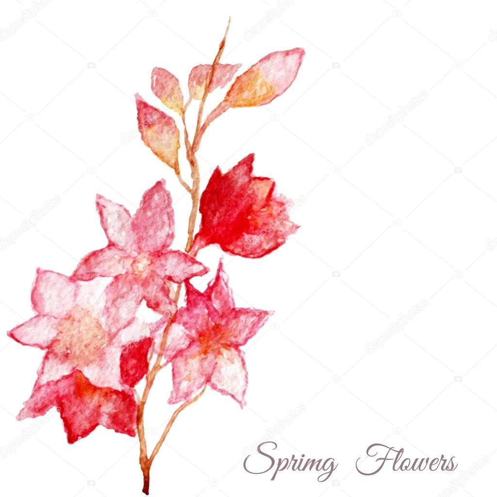 Vector Pink apple tree, sakura, cherry flower. Watercolor hand painted drawing.