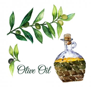 Vector watercolor hand drawn olive branches with glass bottle isolated on white background.
