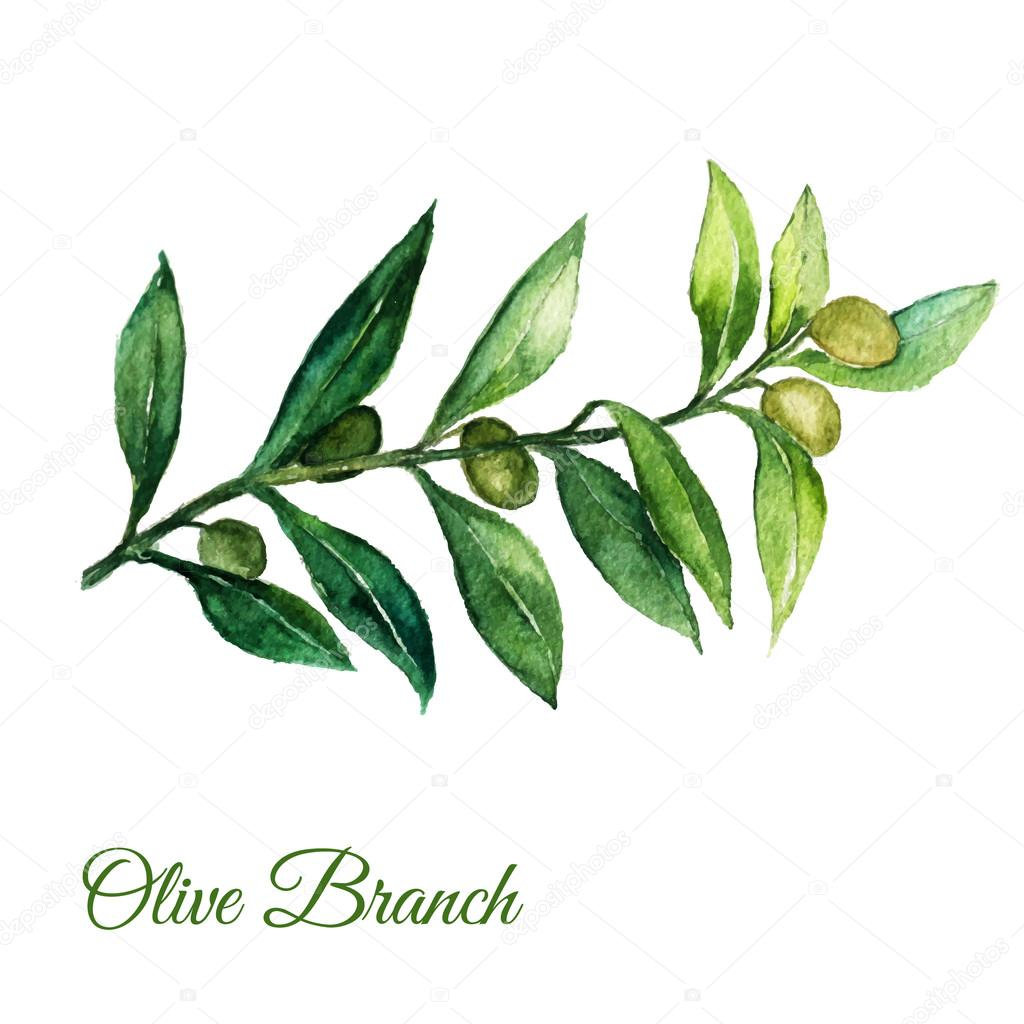Vector watercolor hand drawn olive branch illusration with green leaves on white background.
