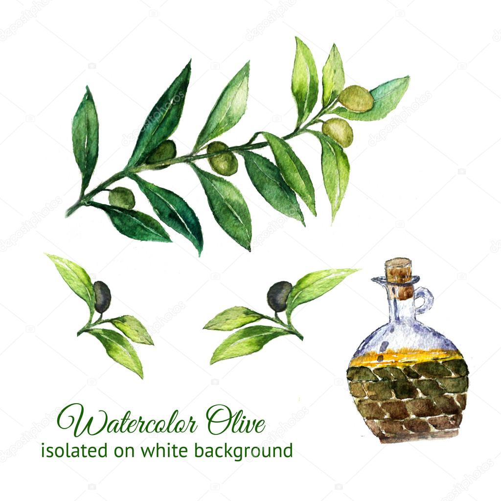 watercolor hand drawn olive branches with glass bottle isolated on white background. Scan of watercolor painting.