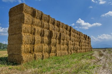 """Картина, постер, плакат, фотообои """"солома или сено, сложенные в поле после сбора урожая. ."""", артикул 122862892"""