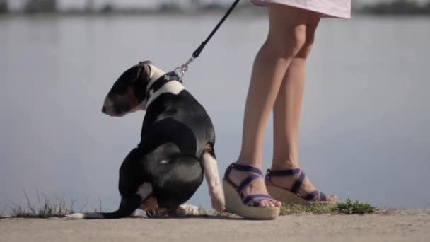 Anglický bulteriér štěně s mladá krásná žena