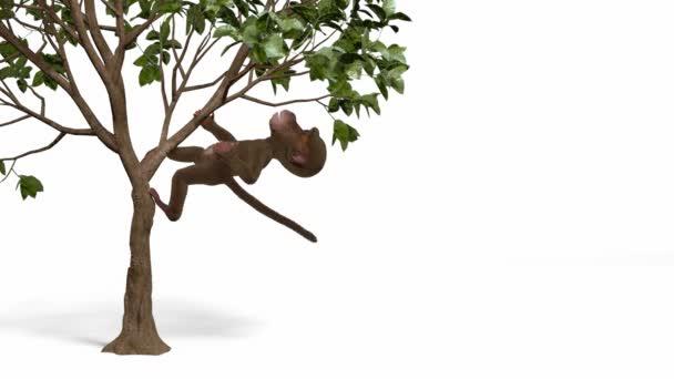 Opice na stromě