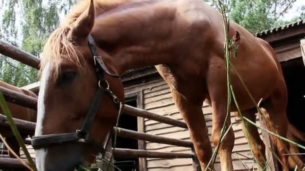 kůň žere seno ve stáji