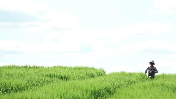 fiú fut a területen, magas fű, futás-on fényképezőgép, elölnézet