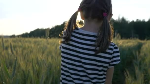 lovely little girl walking on the wheat field, back view, slow motion