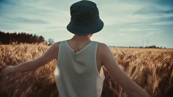 funny teen boy in a blue hat walks on a golden wheat field on a sunny day at sunset, back view, steadicam cinematic shot