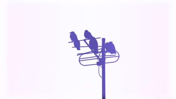 Vrány na anténu, různé barvy