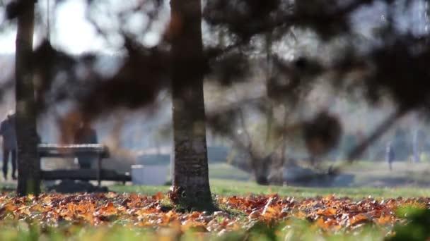 Gelbe Blätter liegen unter einem Baum