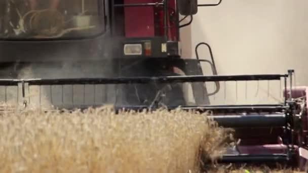 Sklizeň pšenice v poli
