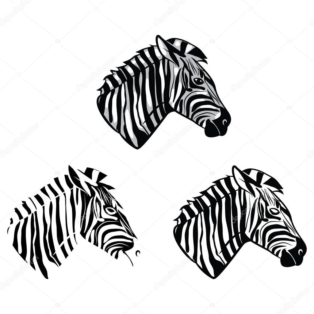 Testa della zebra personaggio dei cartoni animati da