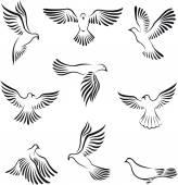 Fényképek Béke galamb