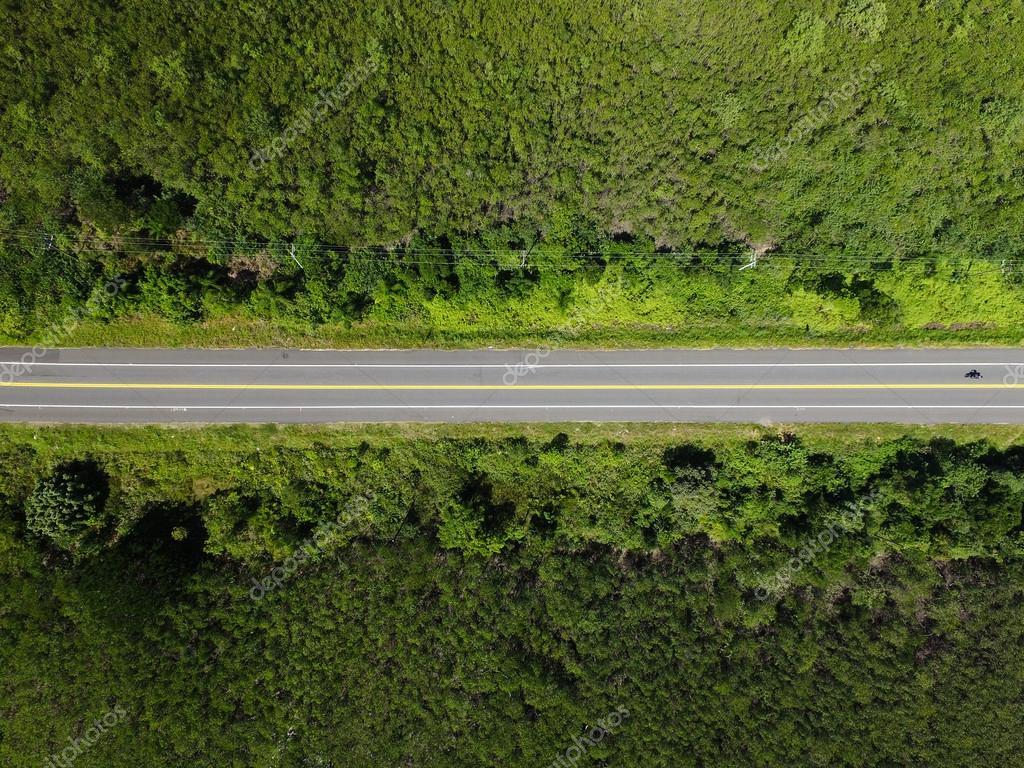 Rural Road in rainforest