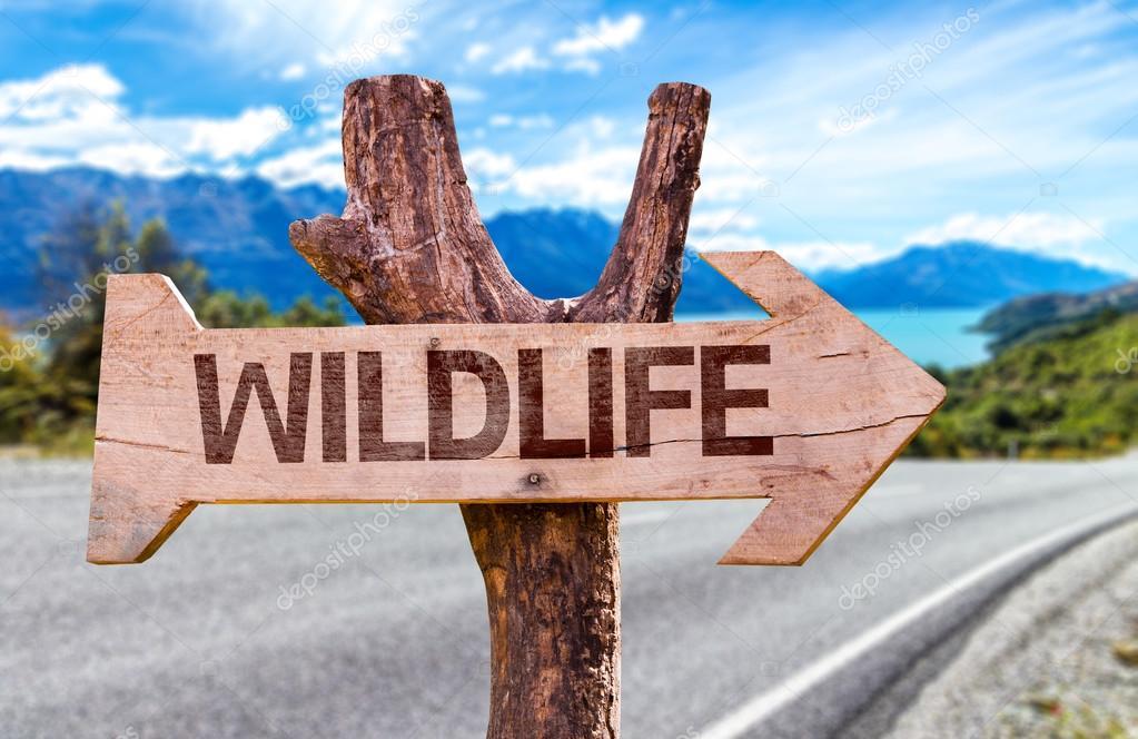 Wildlife wooden sign