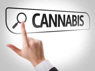 Cannabis written in search bar