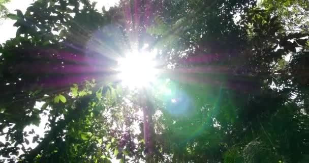 Sonnenstrahlen durch Bäume