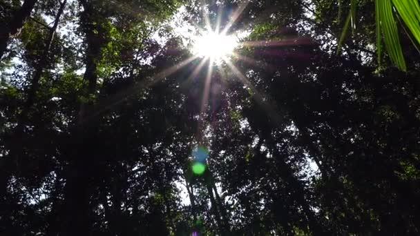 Sluneční paprsky skrze stromy
