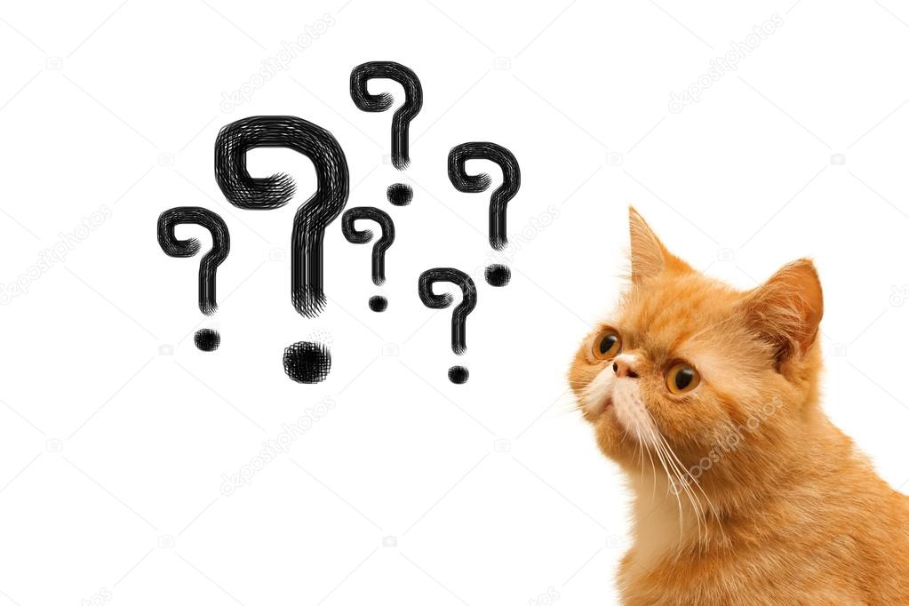 Cat with question mark \u2014 Stock Photo © pannawat 54722143
