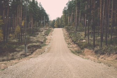country gravel road in the forest. Vintage.