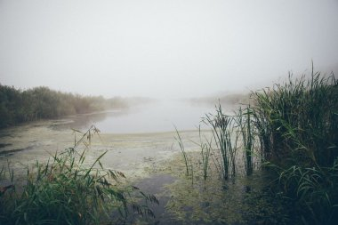 swamp view with lakes and footpath. Retro grainy film look.