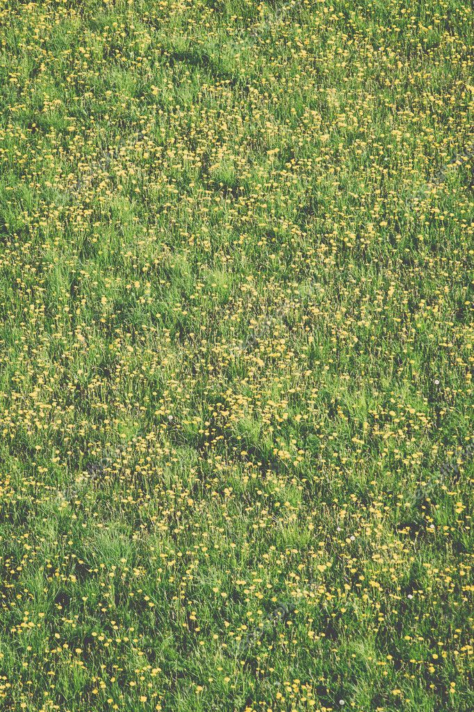Summer flower meadow background - vintage effect