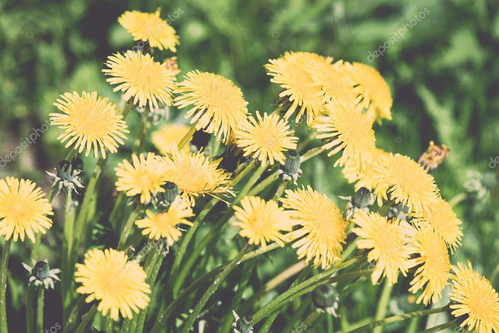 Summer flower meadow background - vintage effect