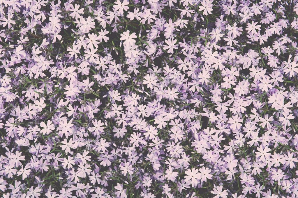 purple summer flower meadow background - vintage effect