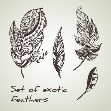 Vector set of exotic peerless decorative hand drawn black ink feathers