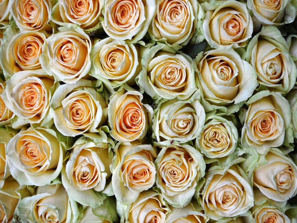 Close-up of bunch of yellow roses flower against white background