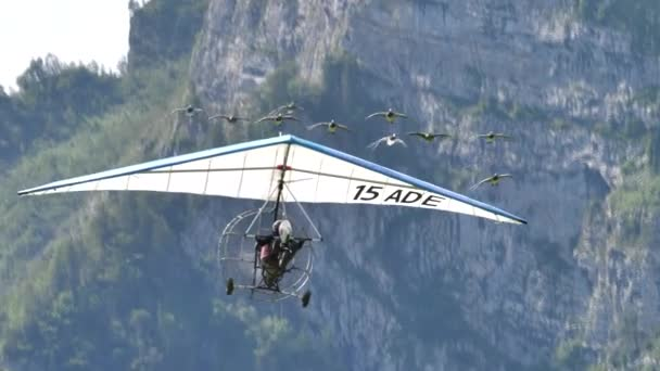 Amazing close-up of rare migratory birds flight in with a powered hang glider