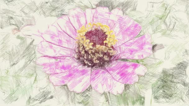 drawing color of pink zinnia flower
