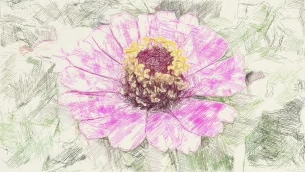 rajz színe rózsaszín zinnia virág