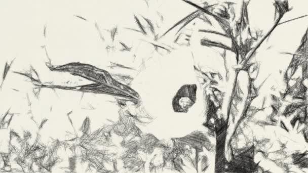 művészet rajz fekete-fehér hibiszkusz sabdariffa virág