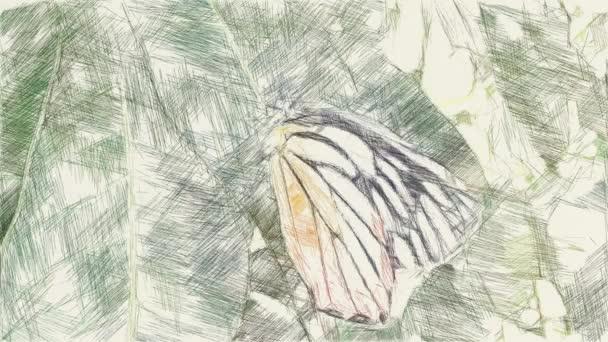 művészet rajz színe pillangó zöld levél