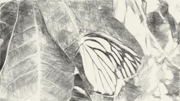művészet rajz fekete-fehér pillangó levél
