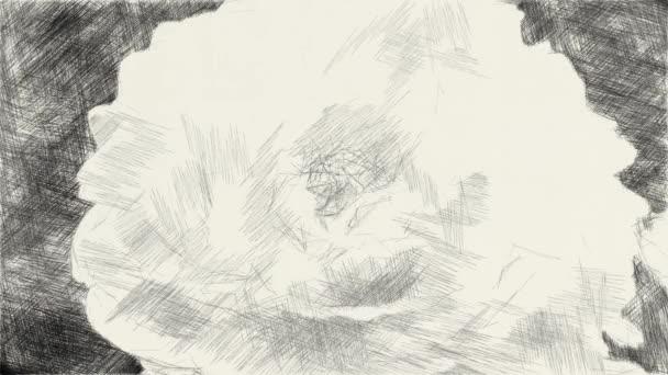 művészet rajz fekete-fehér rózsa virág