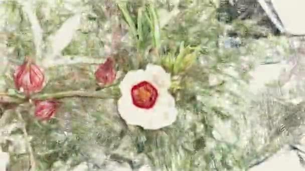 művészet rajz színe hibiszkusz sabdariffa virág a természetben kert