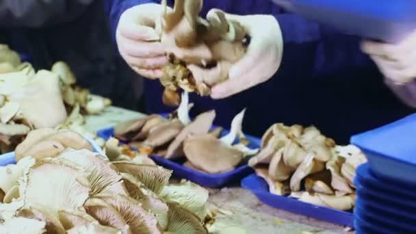 dělníci Vážení houby na váhy