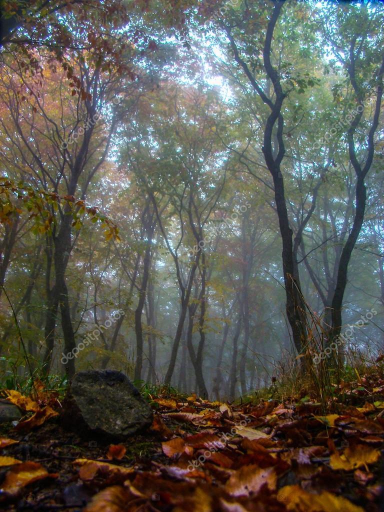 Beautiful forest in fog