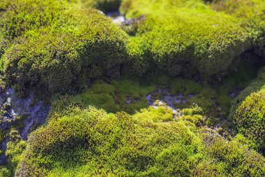 green moss growing on the stone