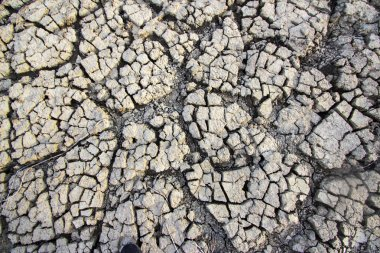 Dried and Cracked ground