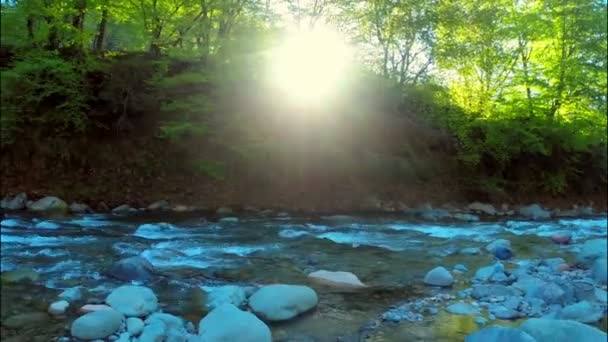 Bach im grünen Wald