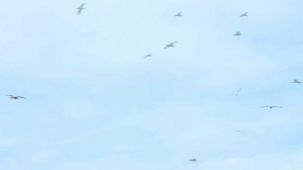 Hejno ptáků letící nad skládáním